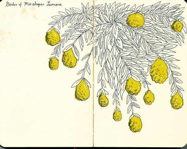 Lemons_Sketchbook_Drew_Christie_Illustration_Drawing_Animation_Illustration_Seattle